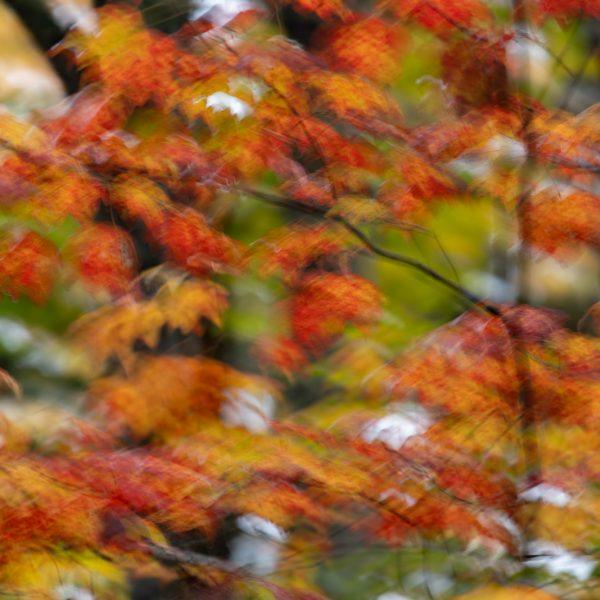 brendanrowlands-blurred-borroso-ICM-1