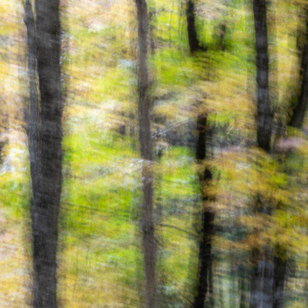 brendanrowlands-blurred-borroso-ICM-2