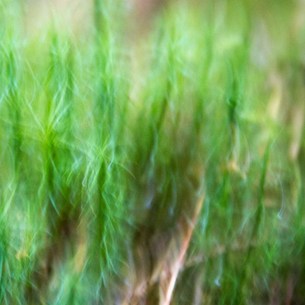 brendanrowlands-blurred-borroso-ICM-8