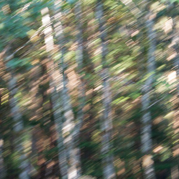 brendanrowlands-blurred-borroso-ICM-9