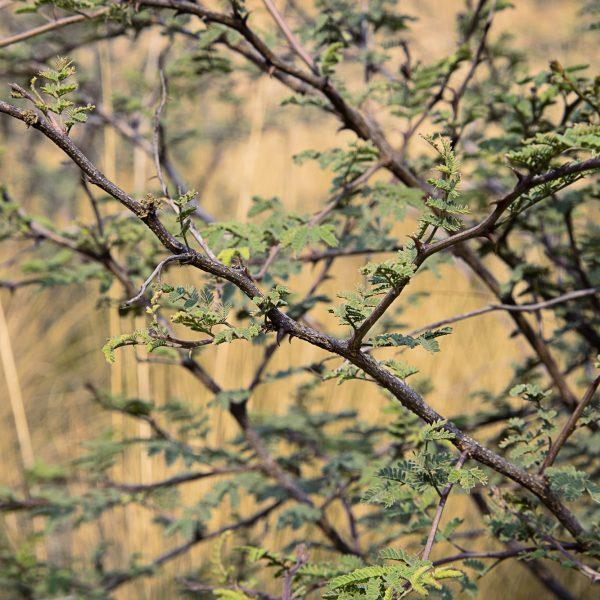 brendanrowlands-bush-light-goldenhour