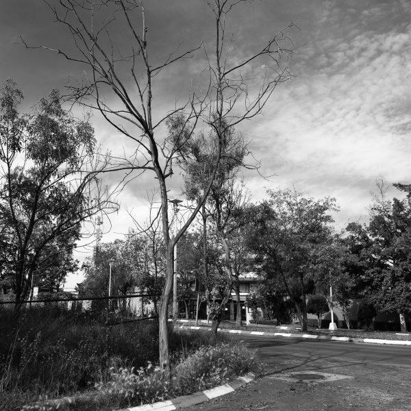 brendanrowlands-dead-tree-urban-mexico-1