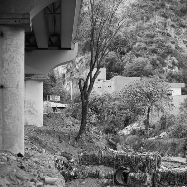 brendanrowlands-dead-tree-urban-mexico-3