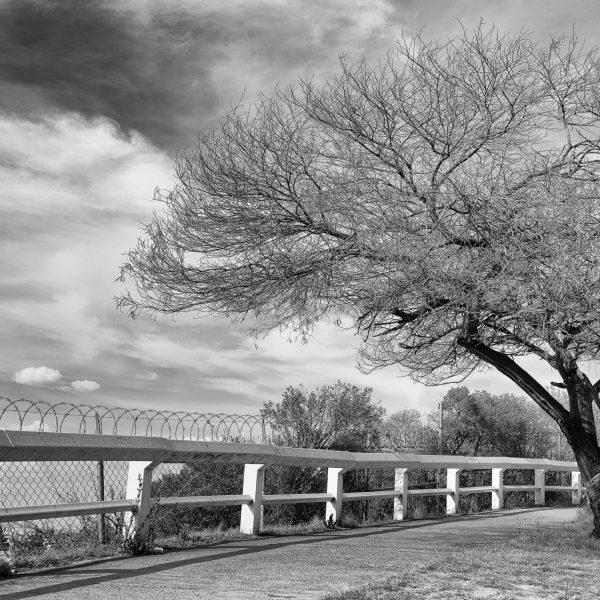 brendanrowlands-dead-tree-urban-mexico-5