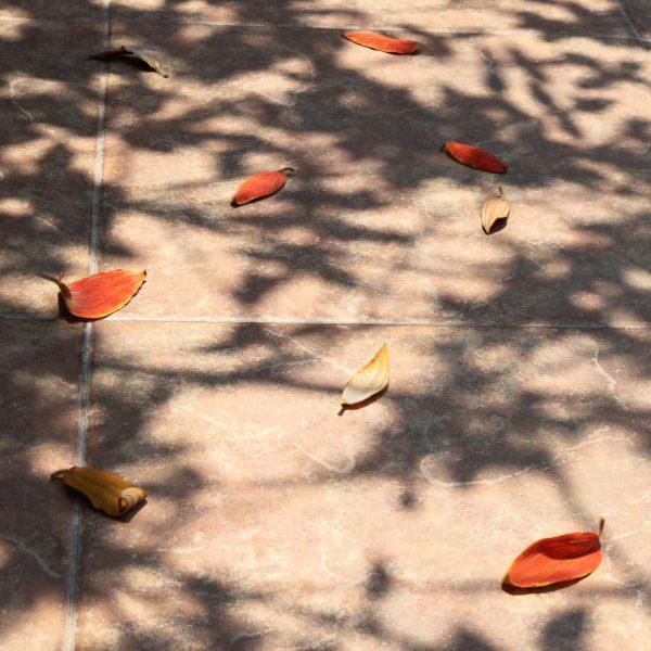 brendanrowlands-leaves-red-shadow