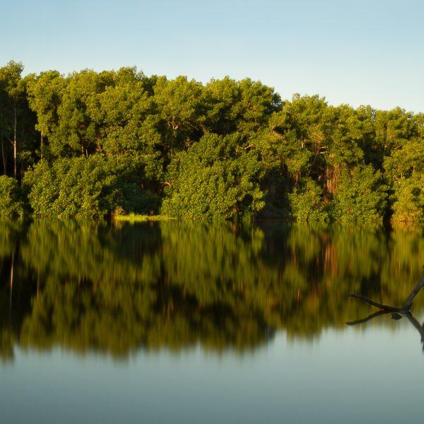 brendanrowlands-manglar-stillwater-chiapas