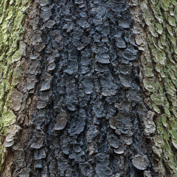 brendanrowlands-tree-bark-texture