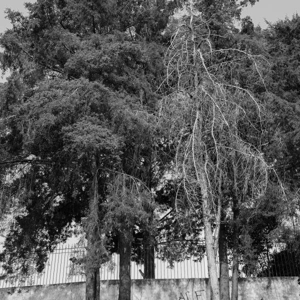 brendanrowlands-dead-trees-2