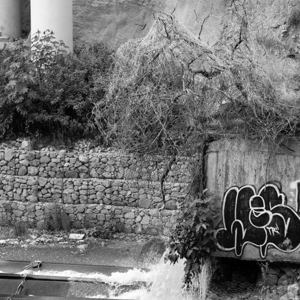 brendanrowlands-dead-trees-4