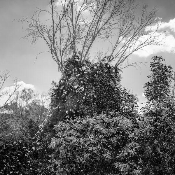 brendanrowlands-dead-trees-6