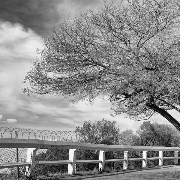 brendanrowlands-dead-trees