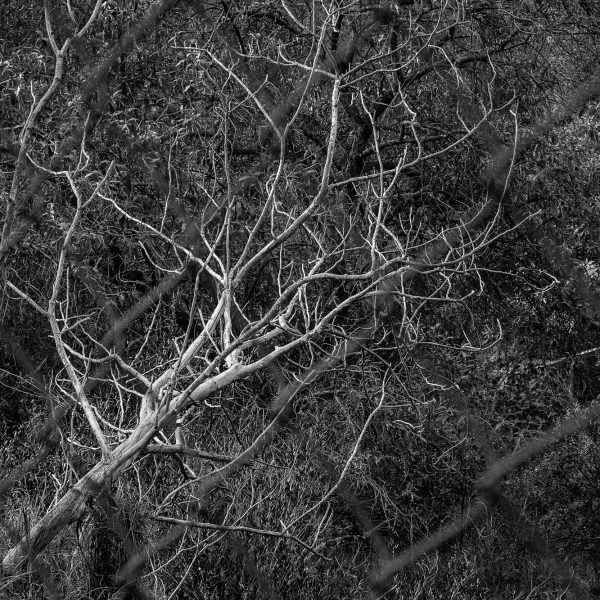 brendanrowlands-dead-trees-7