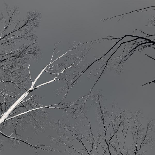 brendanrowlands-dead-trees-8