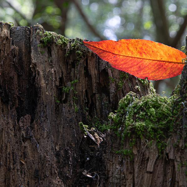 brendanrowlands-ligth-shadow-texture